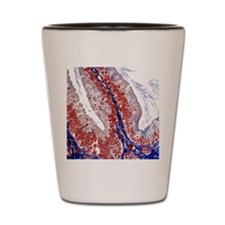 Intestinal villus, light micrograph Shot Glass