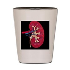 Kidney Shot Glass