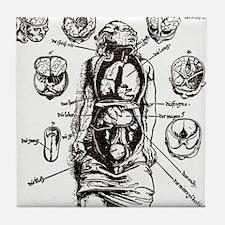 Internal anatomy, 16th century diagra Tile Coaster