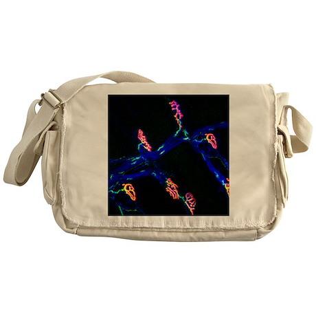 Neuromuscular synapse, light microgr Messenger Bag