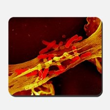 Neutrophil cell trapping bacteria, SEM Mousepad