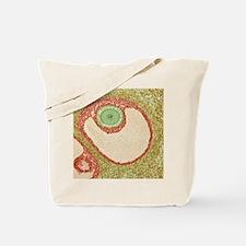 Ovarian follicle, light micrograph Tote Bag