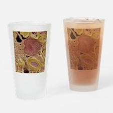 Peripheral nerves, SEM Drinking Glass