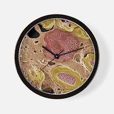 Peripheral nerves, SEM Wall Clock