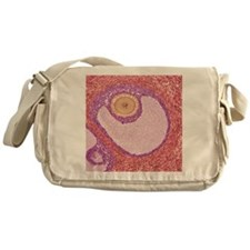 Ovarian follicle, light micrograph Messenger Bag