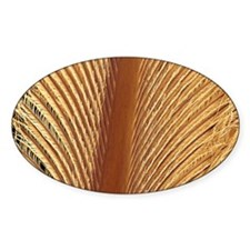 Penguin feather, SEM Decal