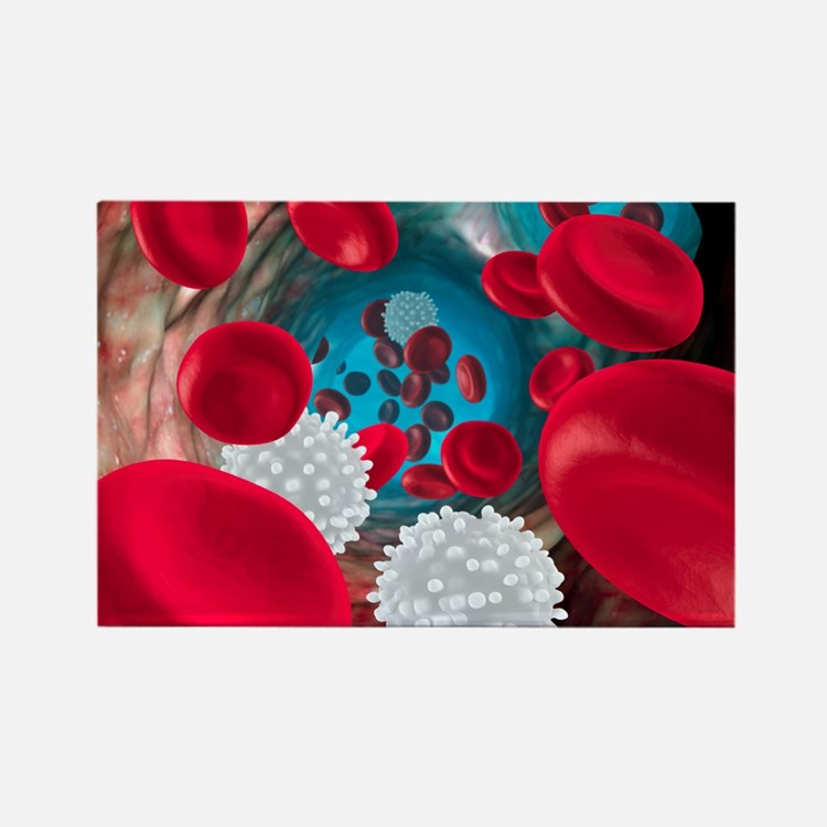 Red and white blood cells Rectangle Magnet