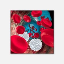 "Red and white blood cells Square Sticker 3"" x 3"""