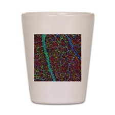 Retina blood vessels and nerve cells Shot Glass