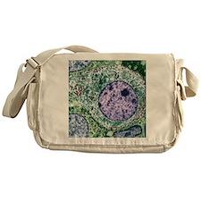 Pituitary gland, TEM Messenger Bag