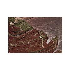 Skeletal muscle, SEM Rectangle Magnet