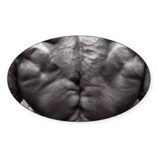 BODYBUILDING BACK Decal