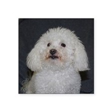 "Portrait of a Maltipoo Square Sticker 3"" x 3"""