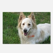rescued border collie, Lu Postcards (Package of 8)