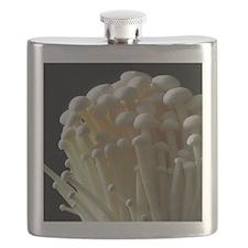 Enoki mushrooms (Flammulina velutipes) Flask