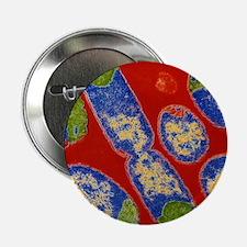 """E. coli bacteria 2.25"""" Button"""