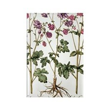 Columbine flowers Rectangle Magnet