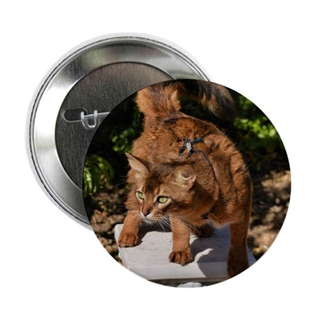 "wild Somali cat 2.25"" Button"
