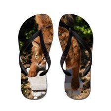 wild Somali cat Flip Flops