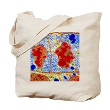 False-colour TEM of root cell division Tote Bag