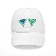 Diatoms, SEM Baseball Cap