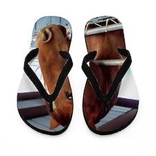 Horse Photo by Leslie Harlow Flip Flops