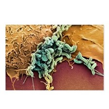 Helicobacter pylori bacte Postcards (Package of 8)