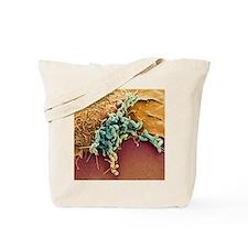 Helicobacter pylori bacteria, SEM Tote Bag