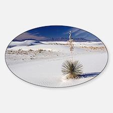 Soaptree yucca (Yucca elata) Decal