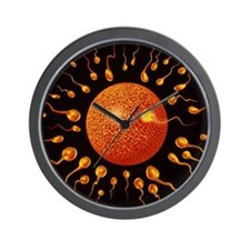Sperm fertilising egg Wall Clock