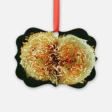 Stem cells, SEM Ornament