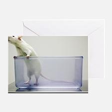Sprague-Dawley laboratory rat Greeting Card