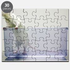 Sprague-Dawley laboratory rat Puzzle