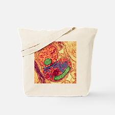 Synapse nerve junction, TEM Tote Bag