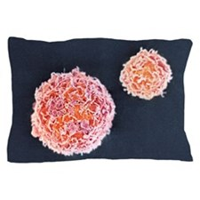 Stem cells, SEM Pillow Case