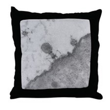 TEM of T4 bacteriophage infecting E.  Throw Pillow