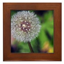 MP_Flower_4 Framed Tile