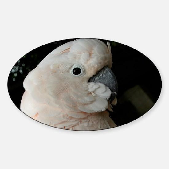 01 Sticker (Oval)