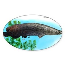 Arapaima Decal
