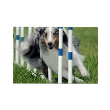 Shetland Sheepdog Blast Rectangle Magnet