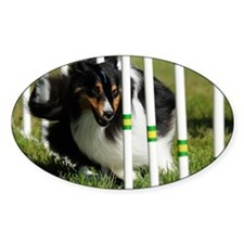 Shetland Sheepdog Jackpot Decal