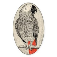 African Grey in Pencil Decal