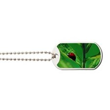 Ladybug on a Leaf Dog Tags