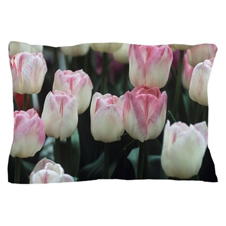 Tulipa 'Meissner Porzellan' flowers Pillow Case