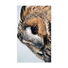 Eagle Owl Nexus Phone Case Decal