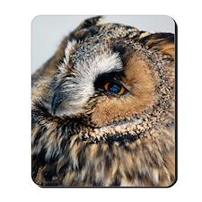Eagle Owl Queen Duvet Mousepad