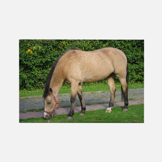 New Forest Pony Rectangle Magnet