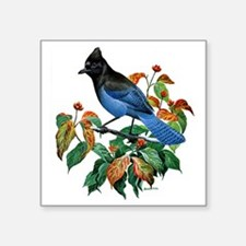 "A Blue Stellers Jay in Dogw Square Sticker 3"" x 3"""