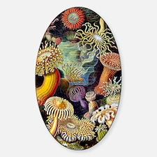 Antique 1904 Sea Anemone Nature Pri Decal