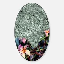 frangipani blossoms Decal
